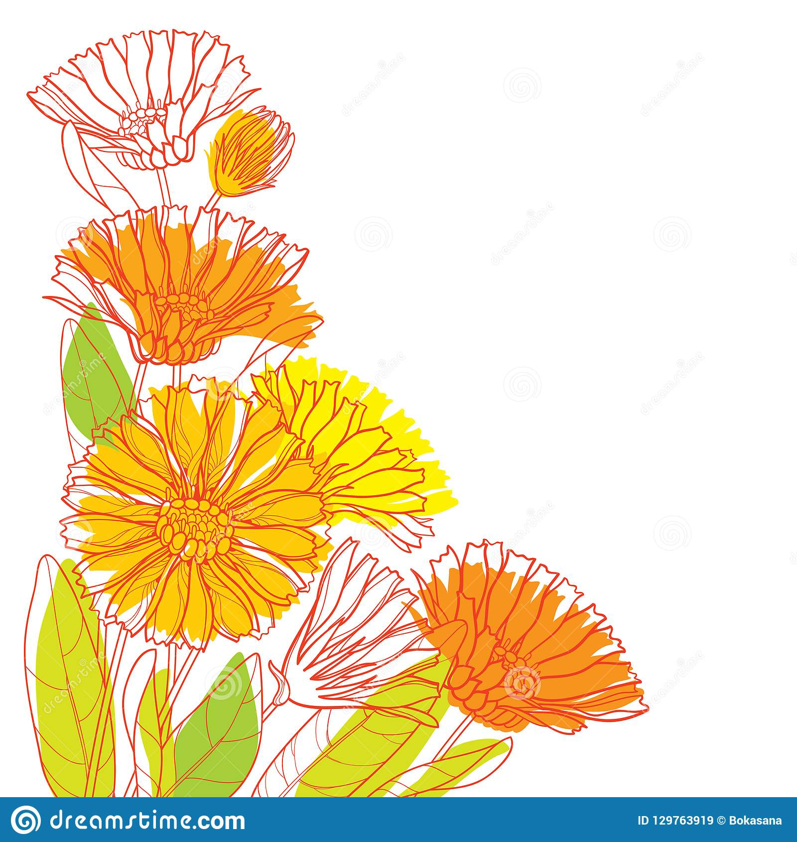Vector corner bouquet with outline Calendula officinalis or pot marigold, bud, green leaf and orange flower isolated on white.