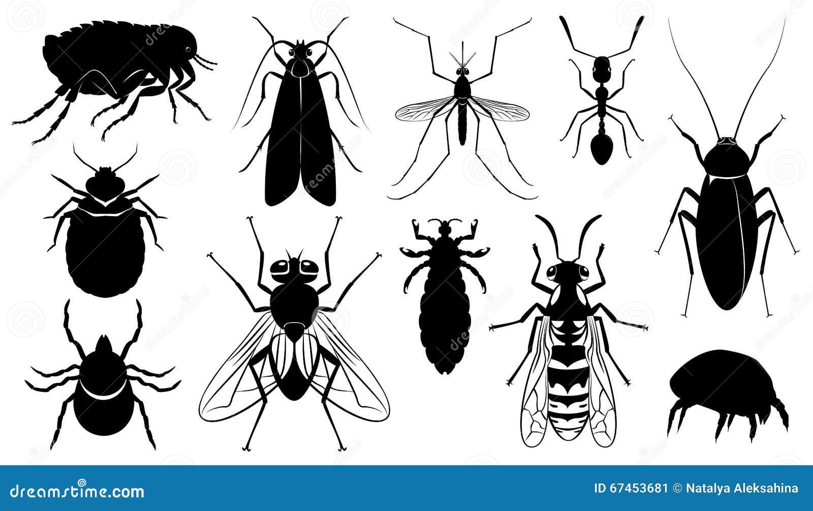 vector das sch u00e4dliche  das stechen und die insekten vektor