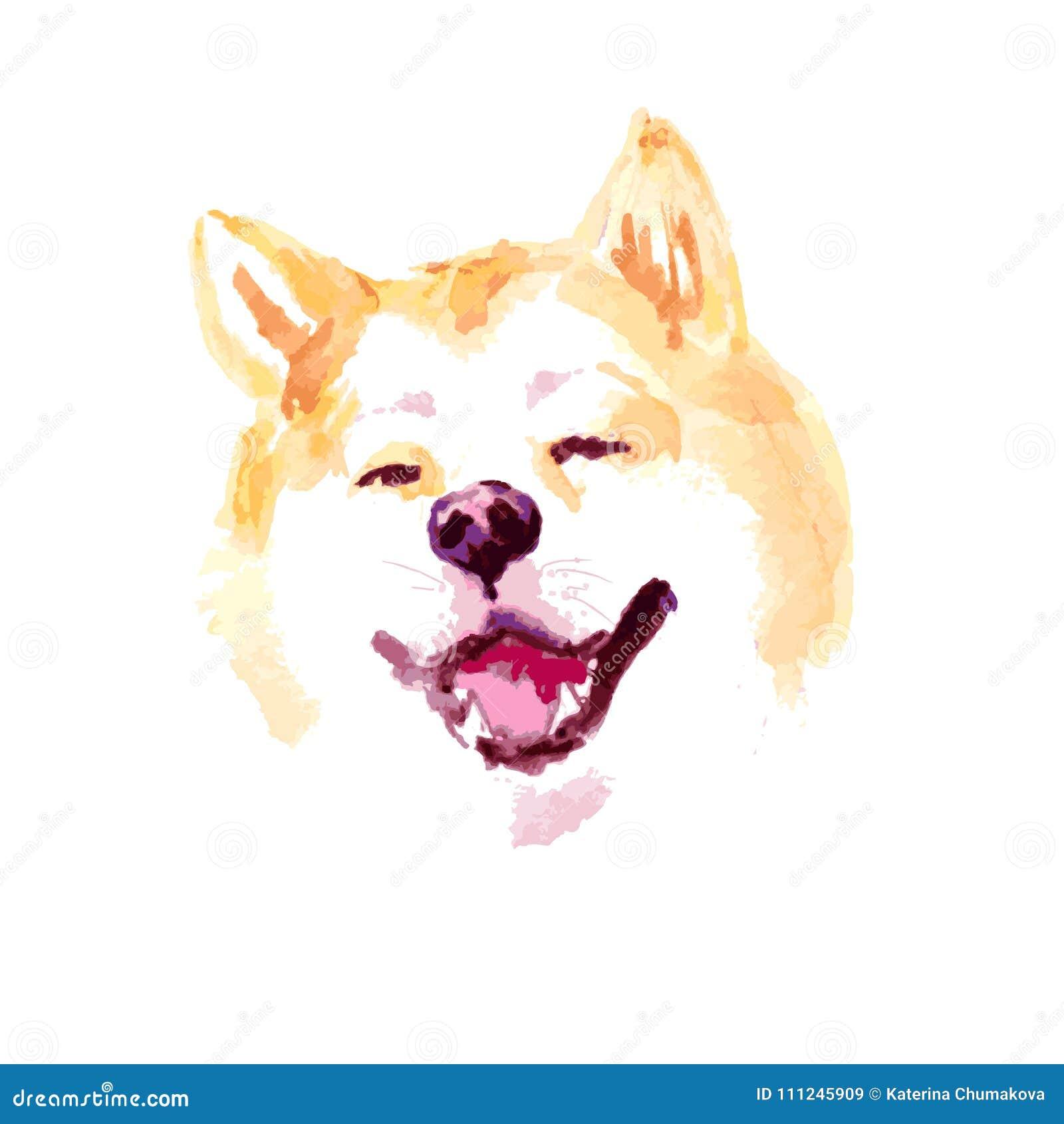 Vector de hondportret van waterverf artistiek die akita op witte achtergrond wordt geïsoleerd