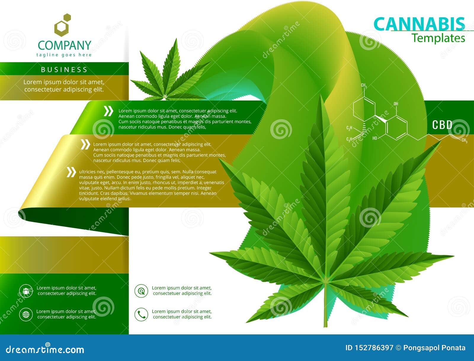 Vector de la planta de marijuana y de las botellas de aceite del c??amo