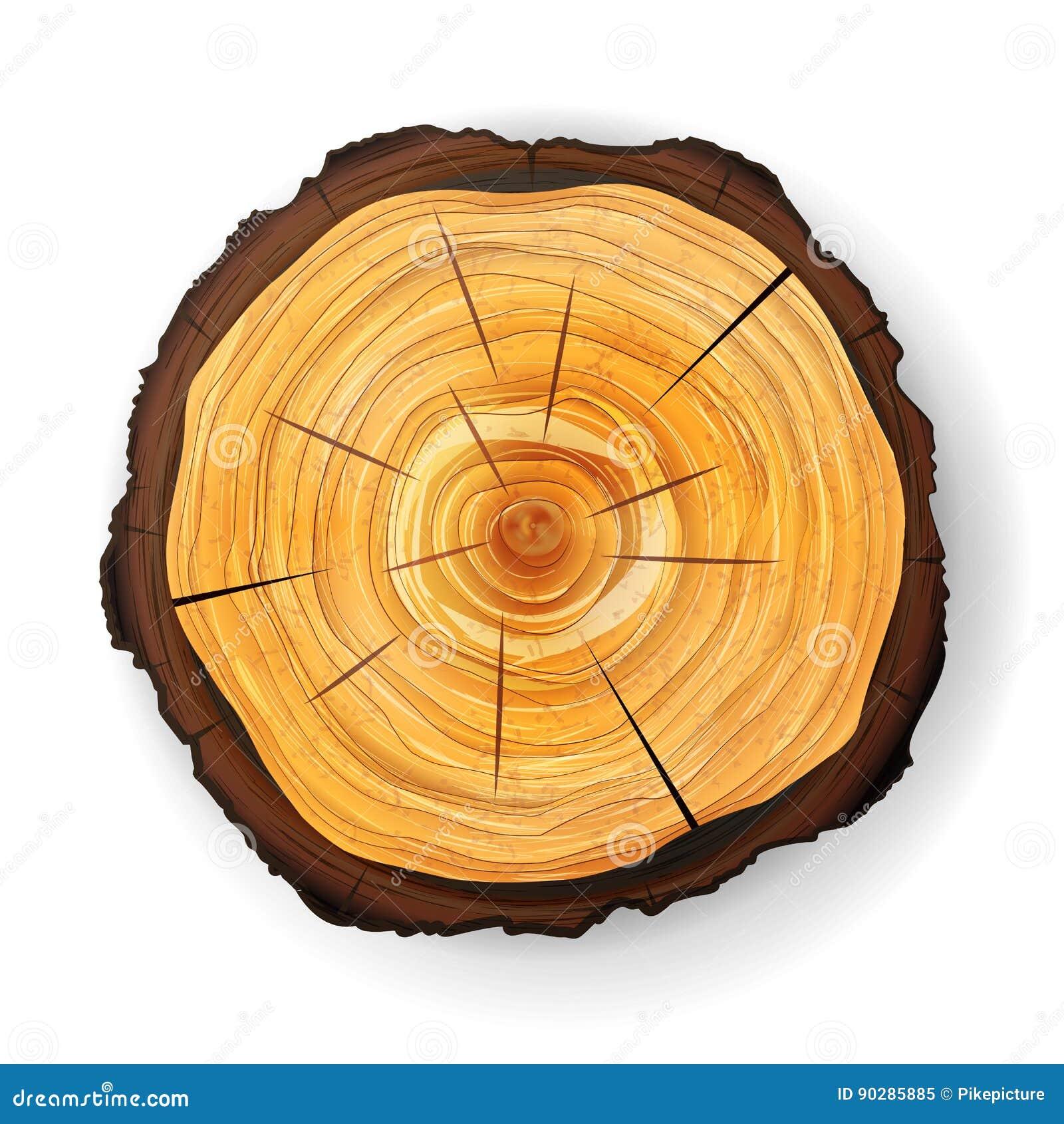Vector de madera del tocón del árbol seccionado transversalmente Corte redondo con los anillos anuales