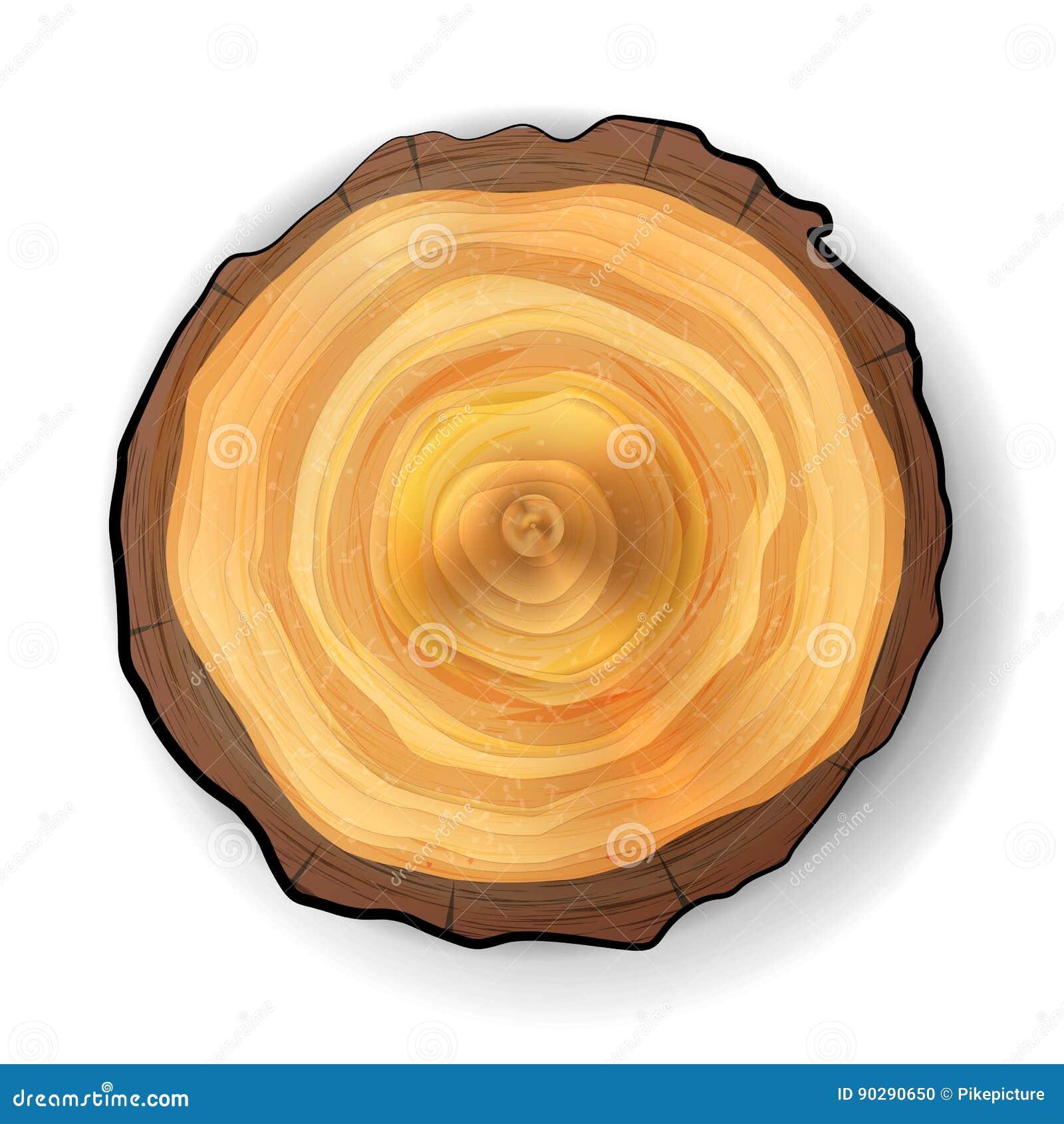 Vector de madera del tocón del árbol seccionado transversalmente Ilustración realista Aislado en el fondo blanco