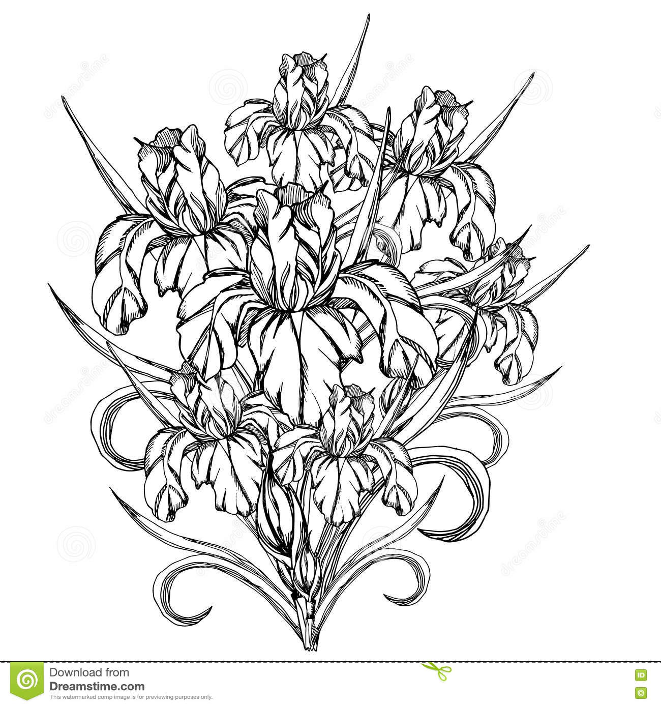 Vector decorative of iris flowers stock vector for Iris flower coloring page