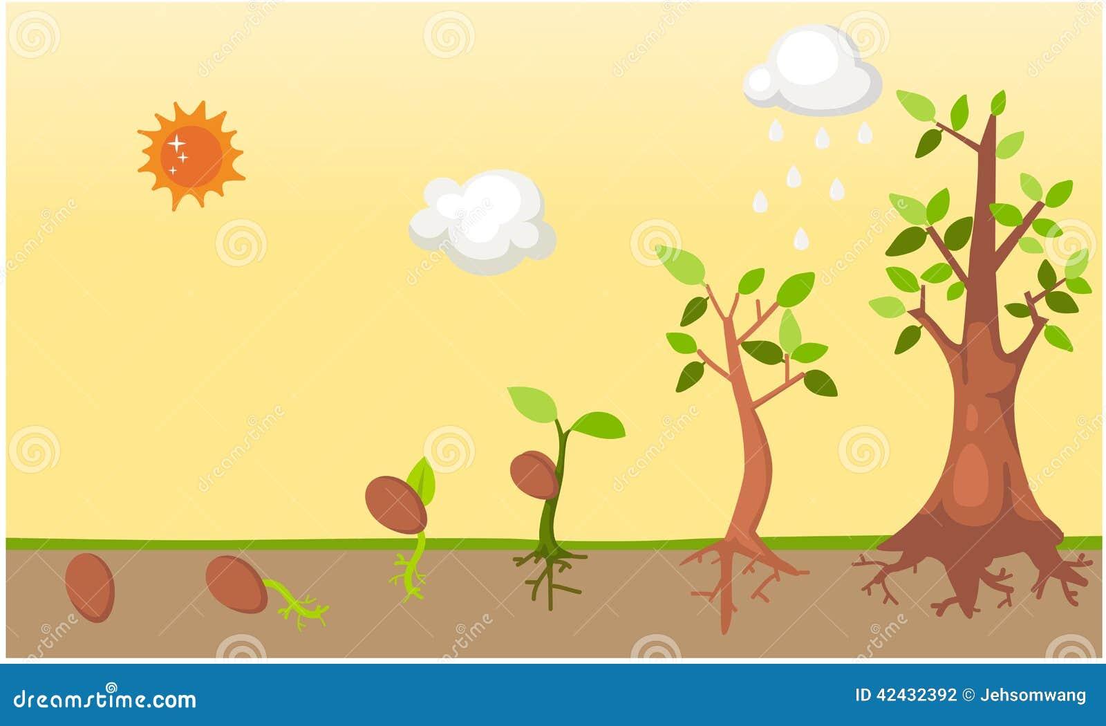 Vector del ciclo de vida del árbol