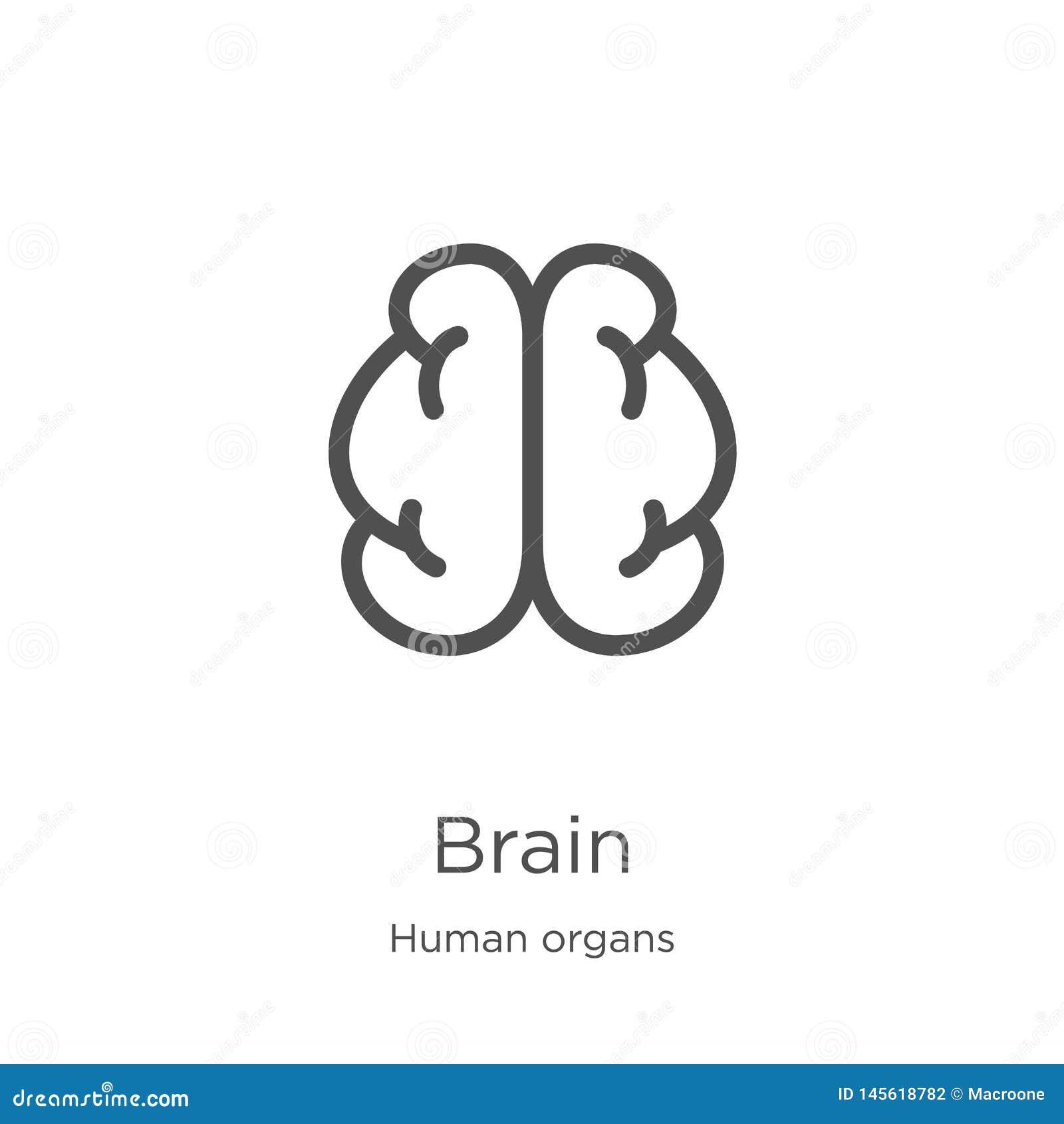 Vector del icono del cerebro de la colecci?n de los ?rganos humanos L?nea fina ejemplo del vector del icono del esquema del cereb
