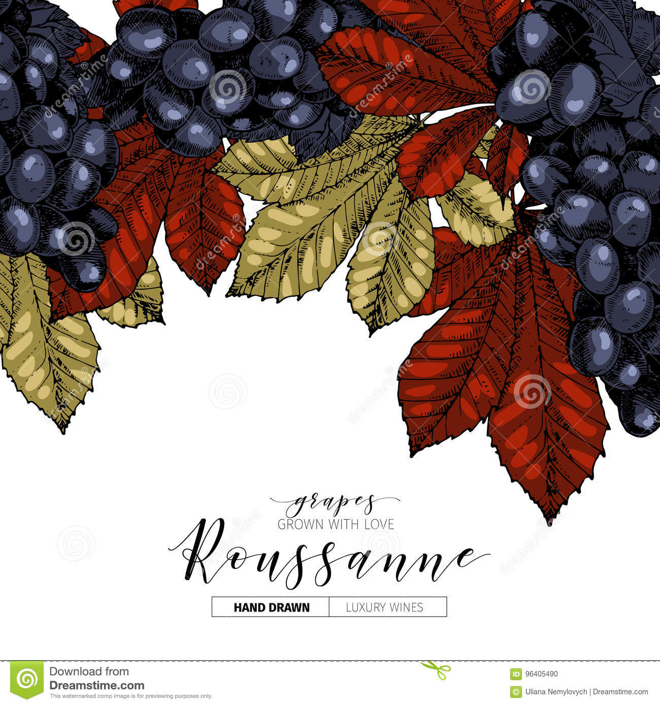 Vector Design Template Of Wine Branding Hand Drawn Colored Grape And Leaves Luxury