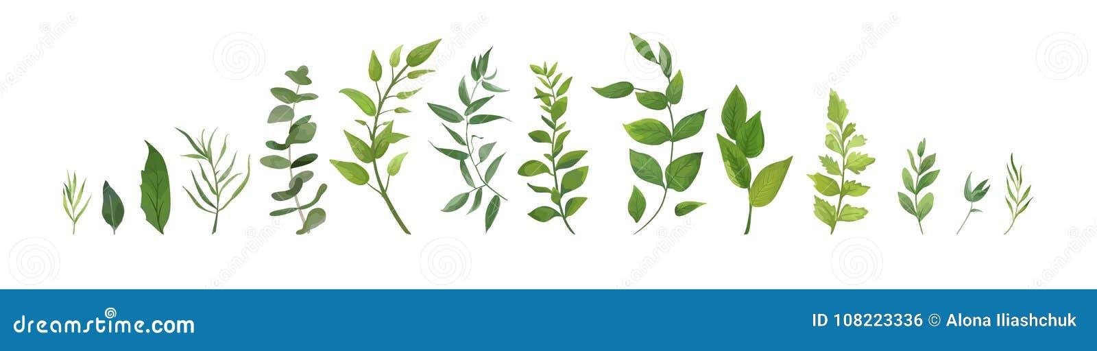 Vector designer elements set collection of green forest fern, tr