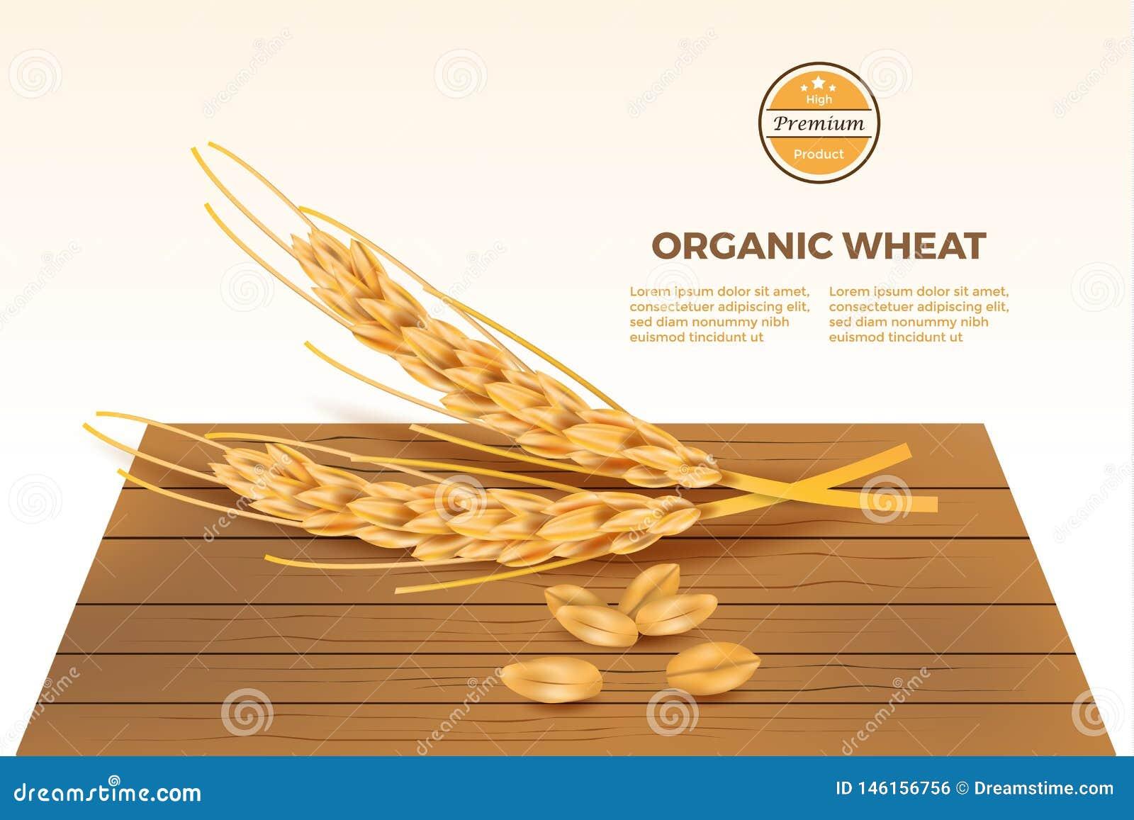 Vector detallado del trigo en la tabla de madera con infographic