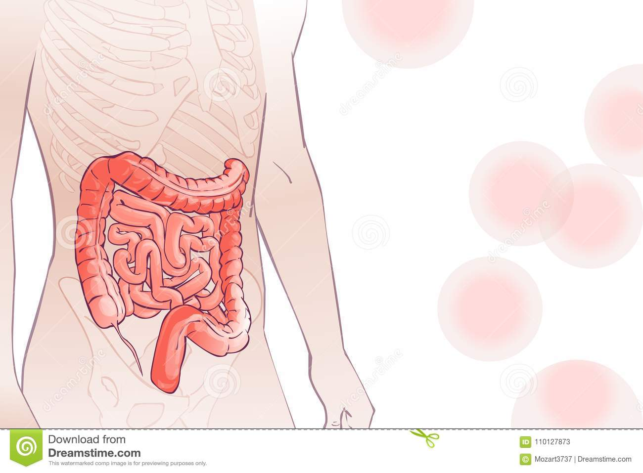 Vector Diagram Illustration Of The Human Colon Stock Vector
