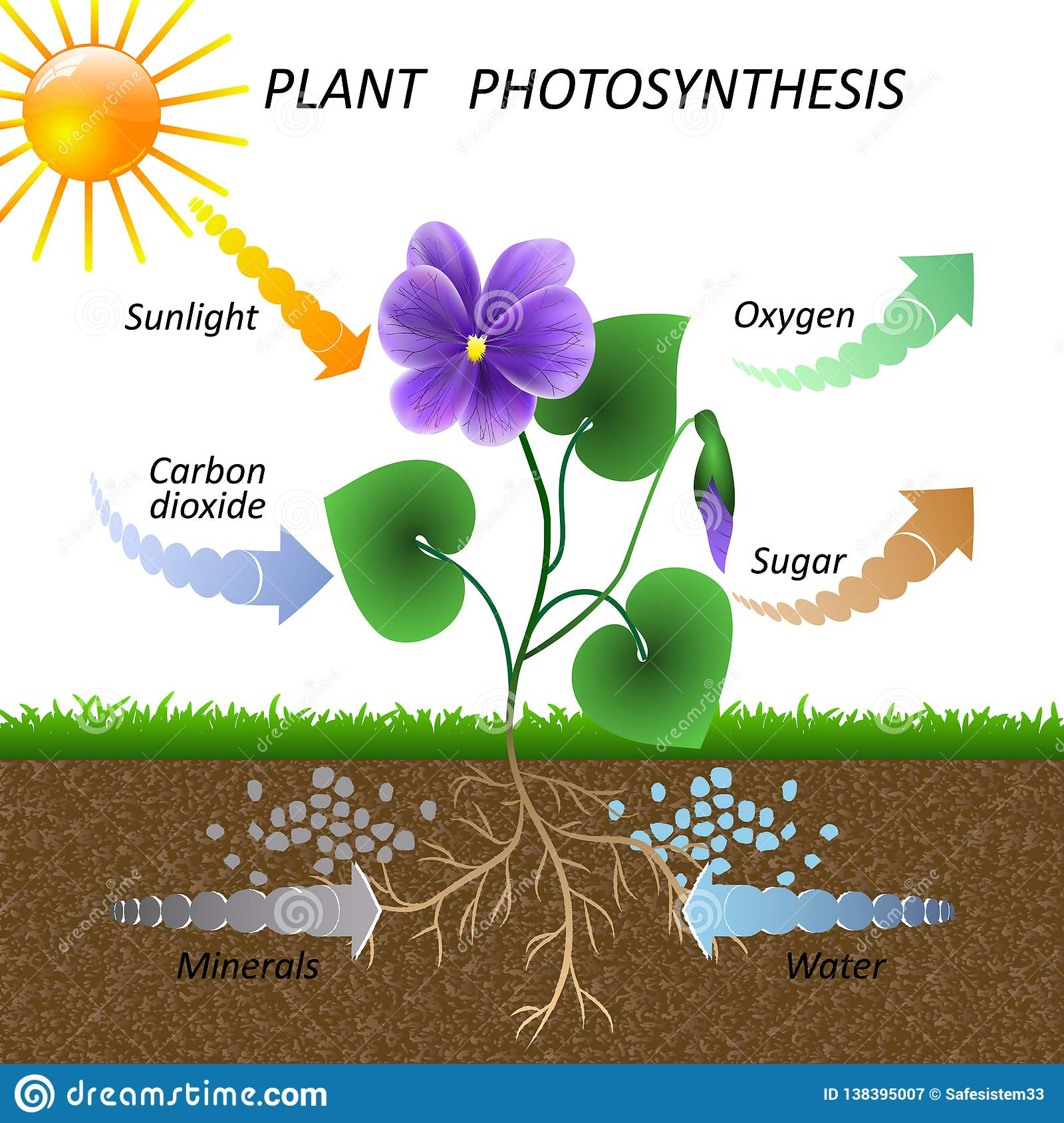 Vector Diagram Of Plant Photosynthesis, Science Education ...