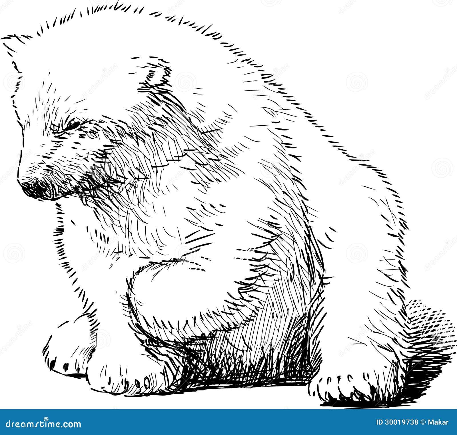 Sitting Polar Bear Stock Vector Illustration Of Nature
