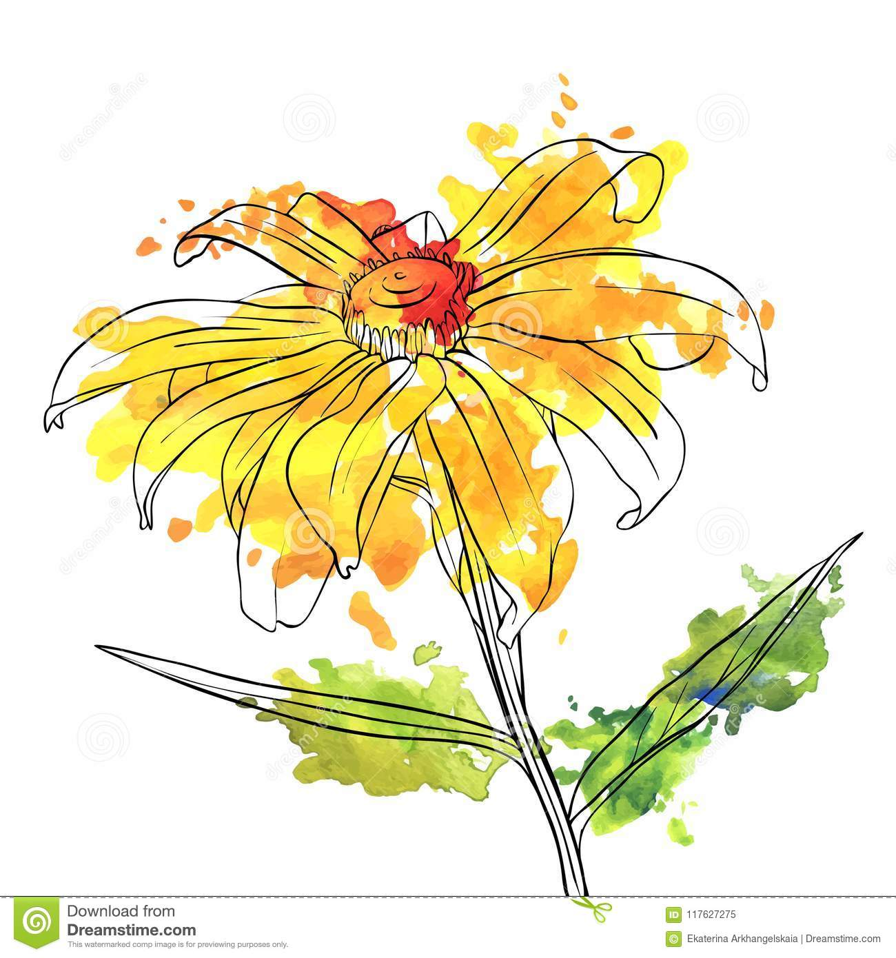 Vector Drawing Flower Of Daisy Stock Vector Illustration Of Floral