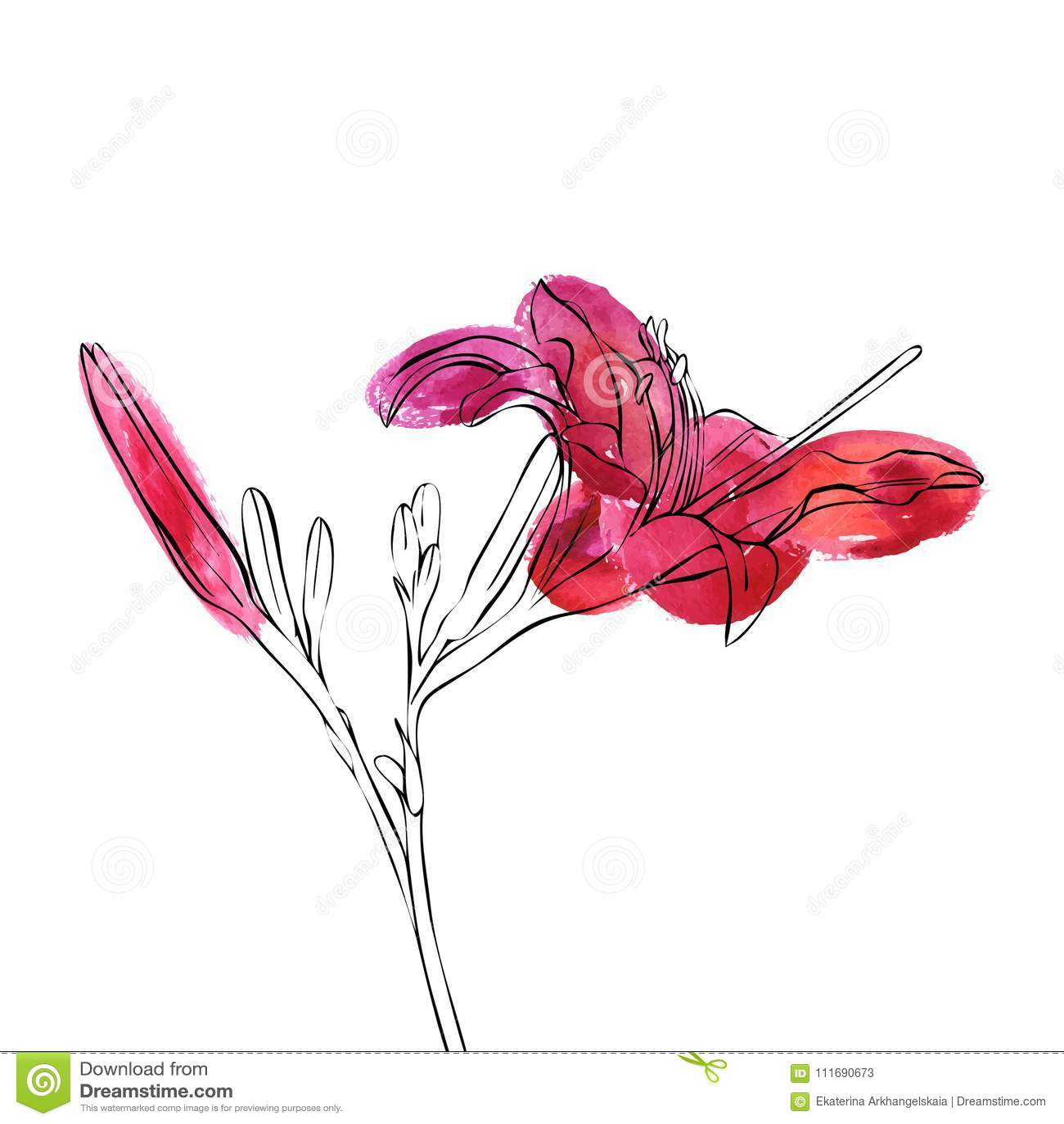 Vector drawing flower of lily stock vector illustration of drawing download vector drawing flower of lily stock vector illustration of drawing line 111690673 izmirmasajfo