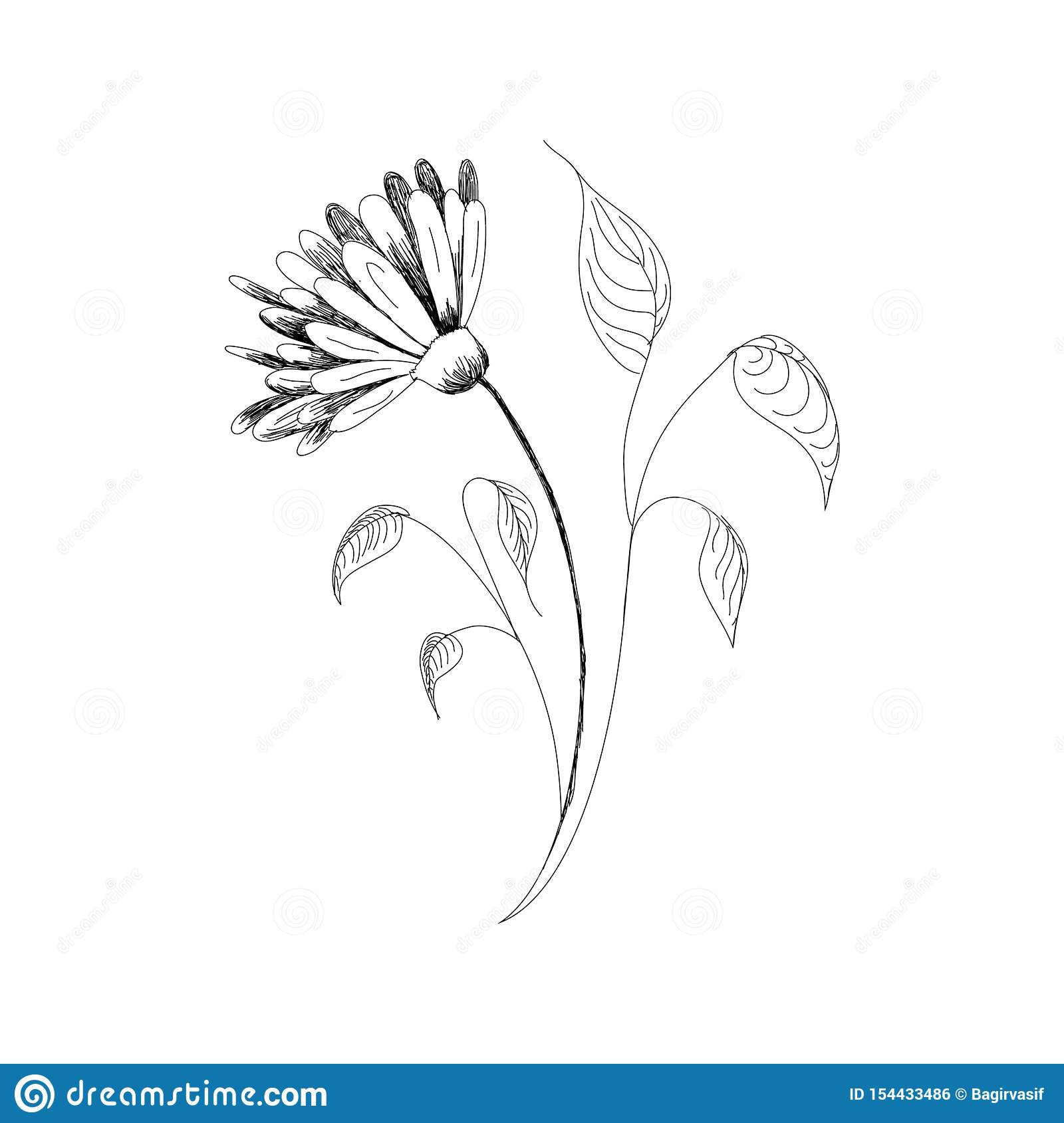 Vector Drawing Flowers Hand Drawn Chamomiles Daisies Jerusalem Artichoke Flower Botanical Drawings Coloring Page Flowers On Stock Illustration Illustration Of Graphic Artichoke 154433486