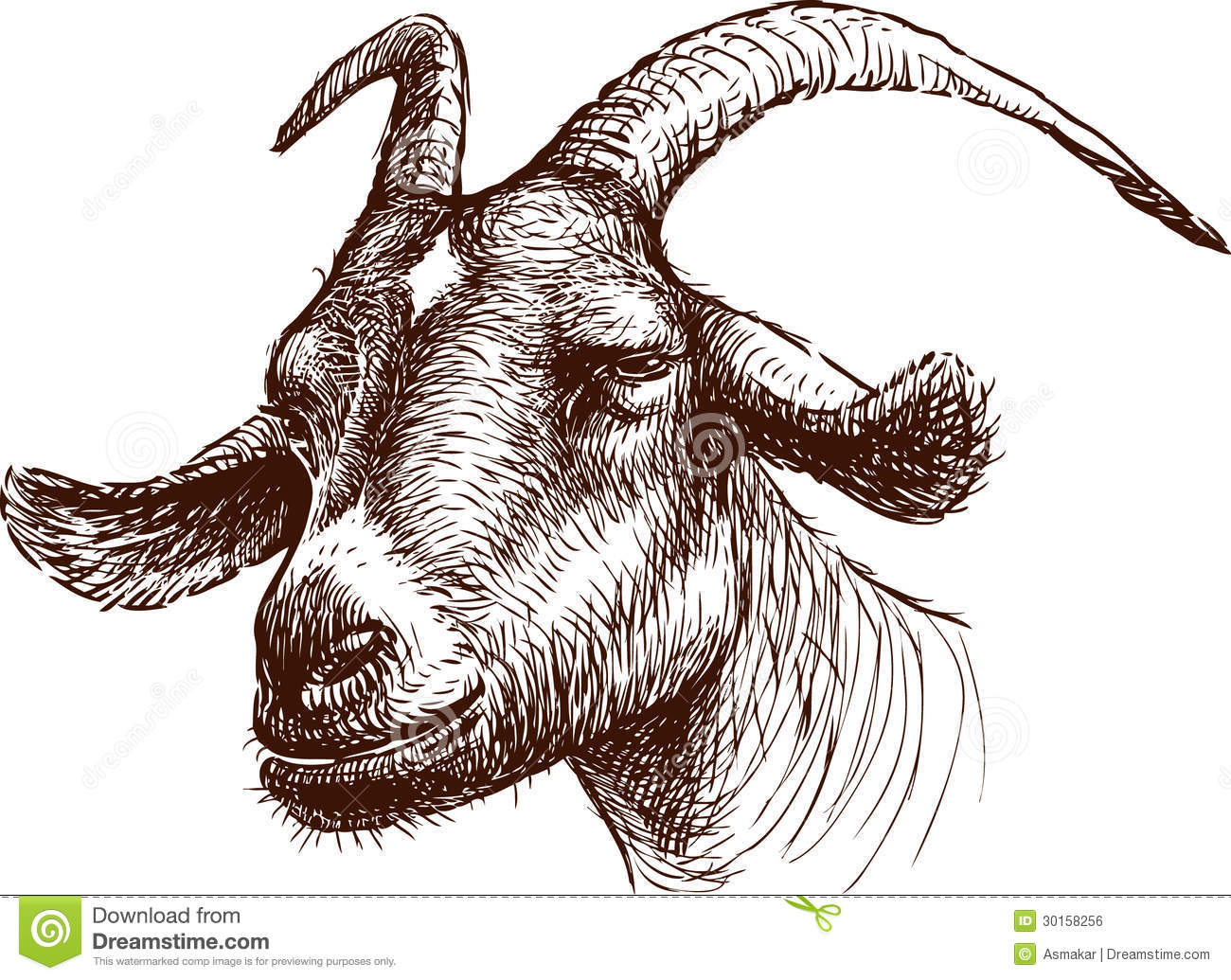 Head Of Goat Stock Vector Illustration Drawn Face