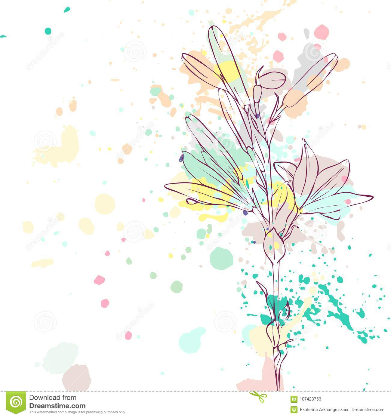 Vector Drawing Lily Flower Stock Vector Illustration Of