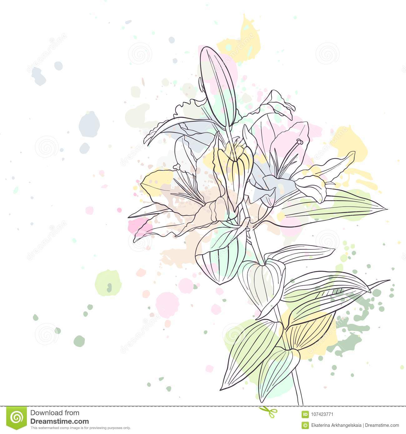 Vector Drawing Lily Flower Stock Vector Illustration Of Graphic