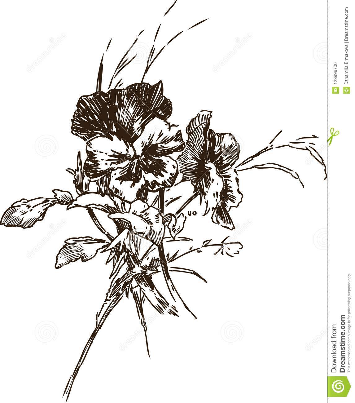 Sketch Of A Bouquet Of Pansies Stock Vector Illustration Of