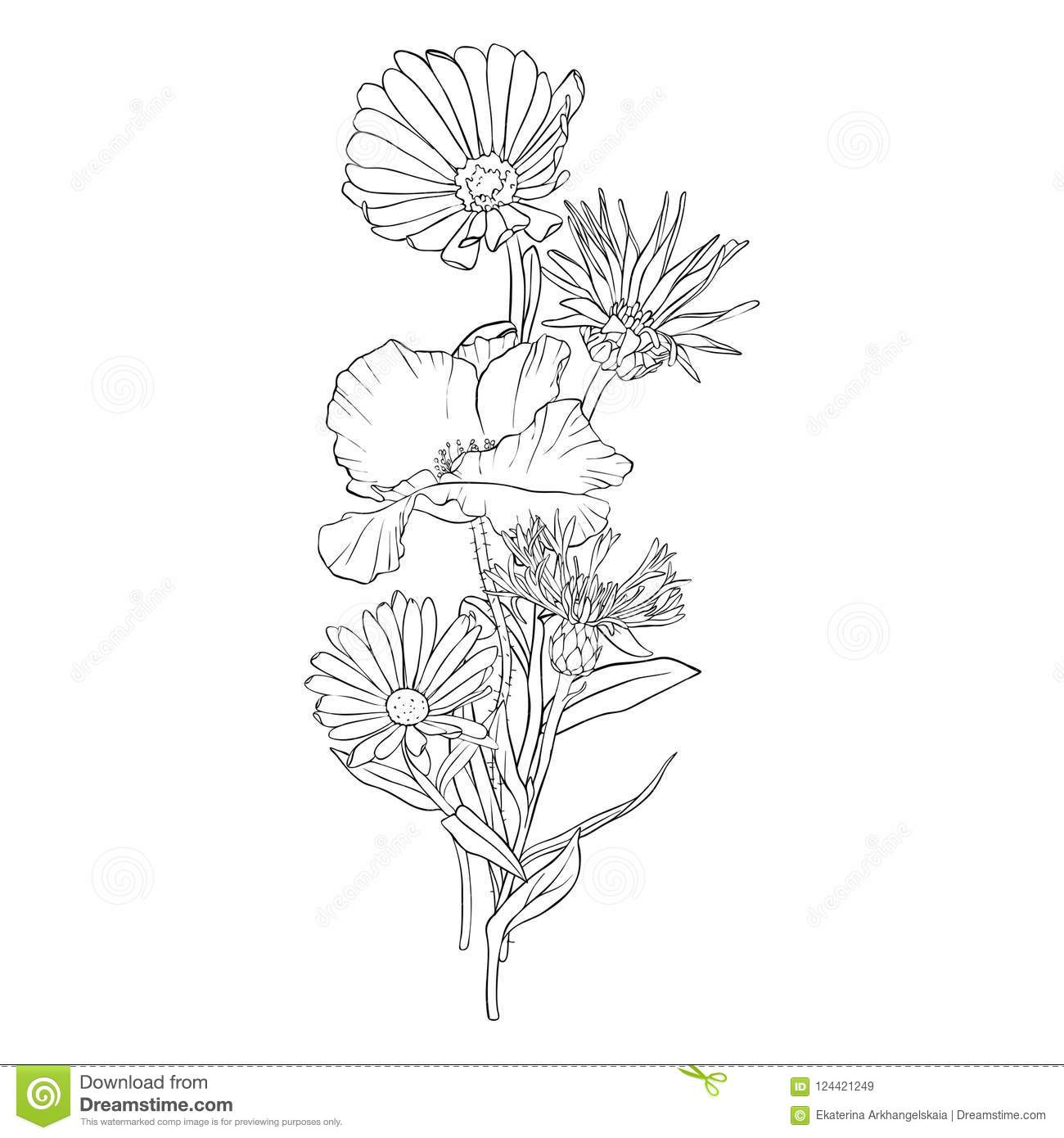 Wild Flower Drawing Poppy Topsimages