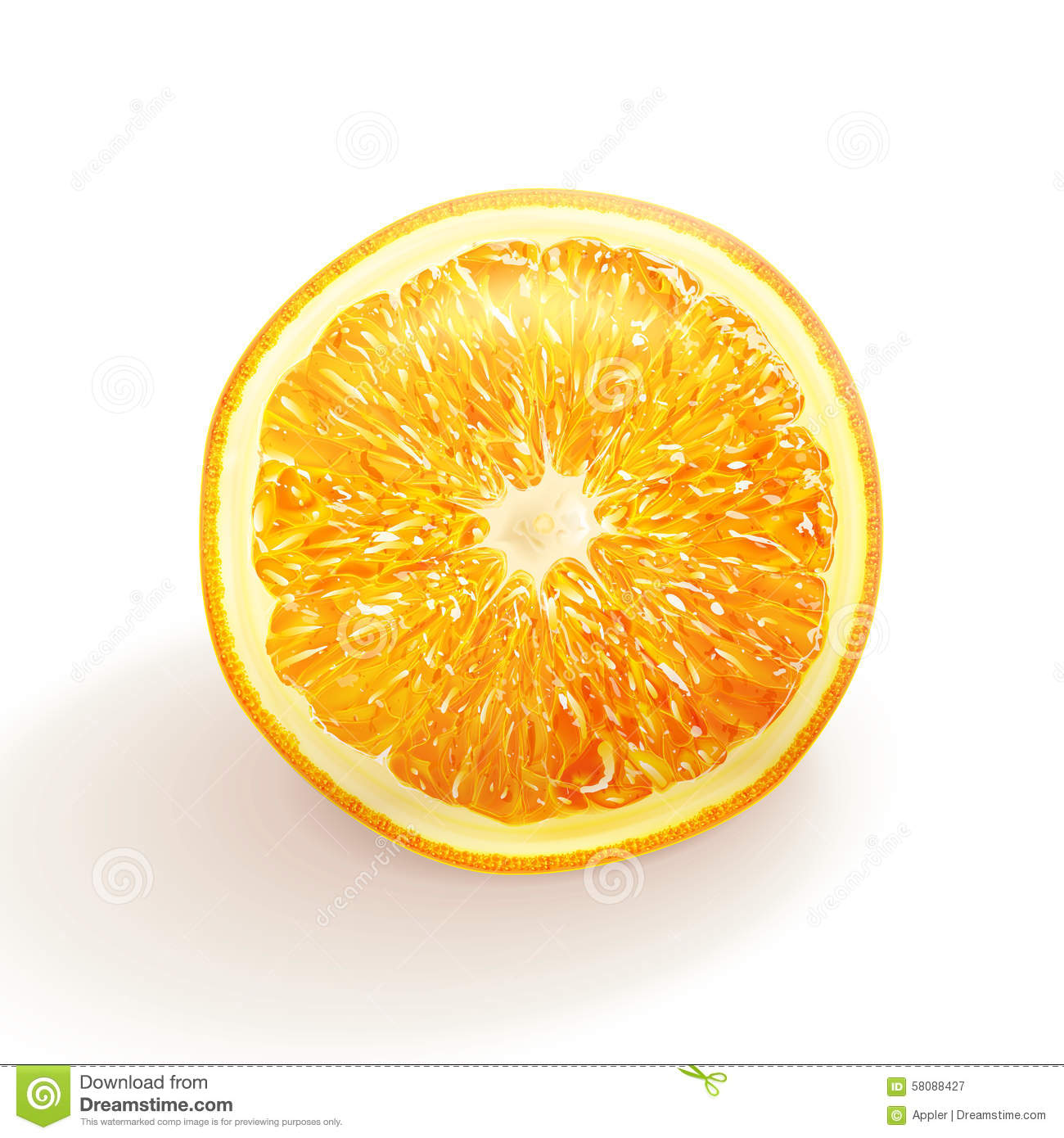 Vector Drawing Realistic Orange Stock Vector - Image: 58088427