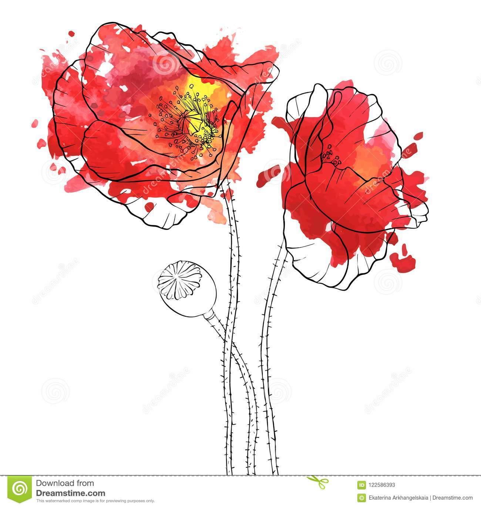 Vector drawing poppy flowers stock vector illustration of natural vector drawing poppy flowers mightylinksfo