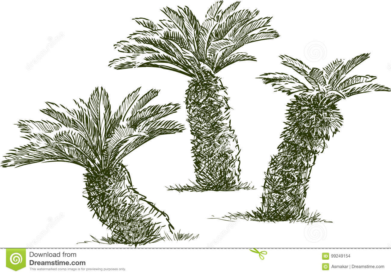 Download Sketches Of The Small Palm Trees Stock Vector   Illustration Of  Graphic, Mediterranean: