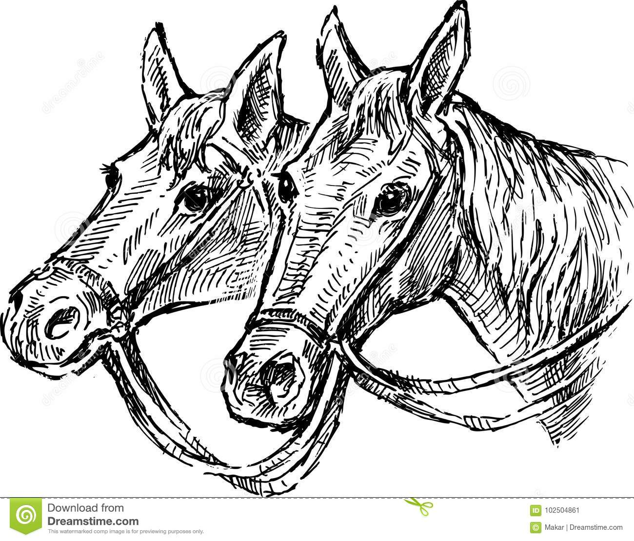 The Heads Of Two Horses Stock Vector Illustration Of Mane 102504861