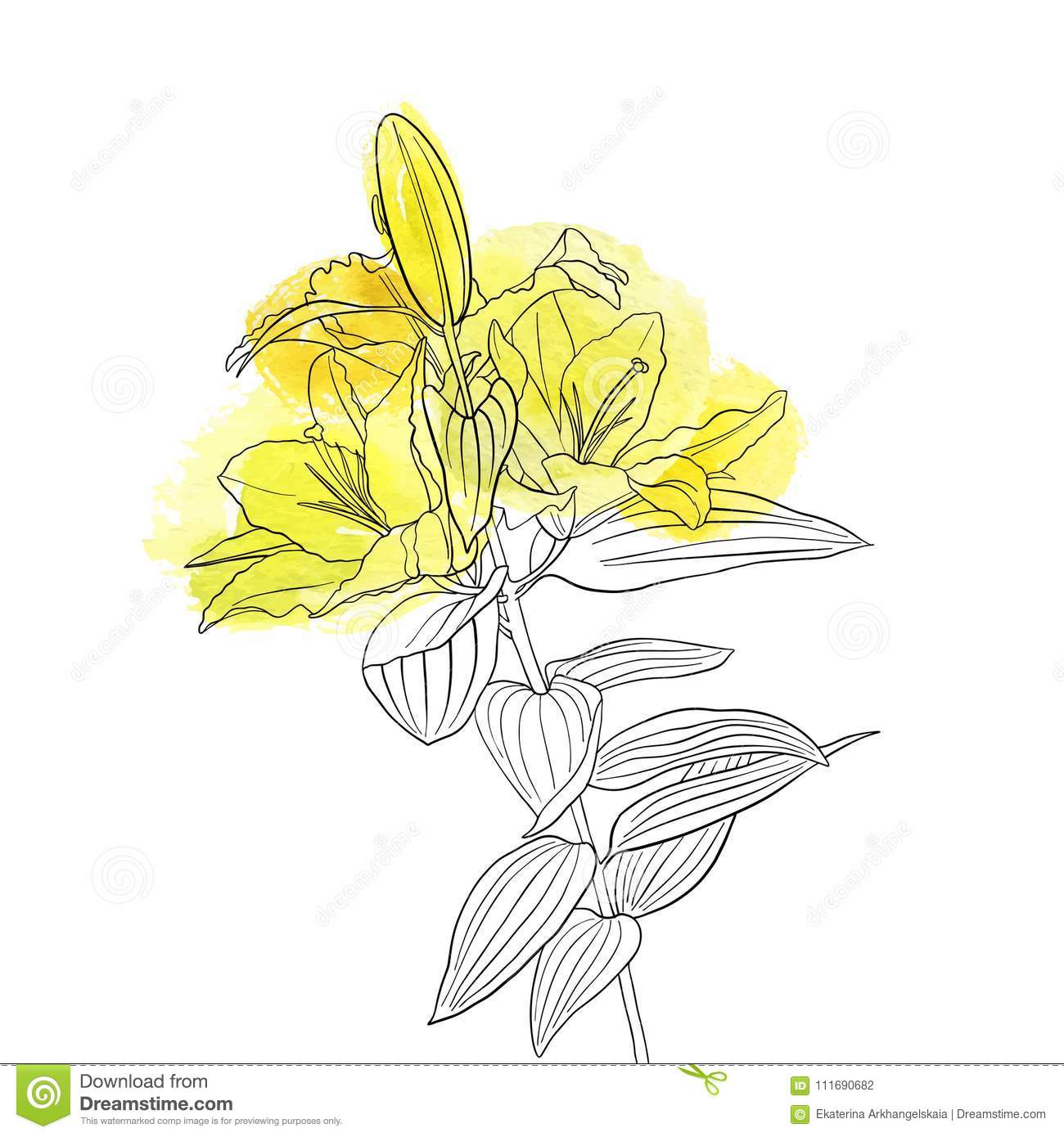 Vector drawing flower of lily stock vector illustration of graphic vector drawing flower of lily izmirmasajfo