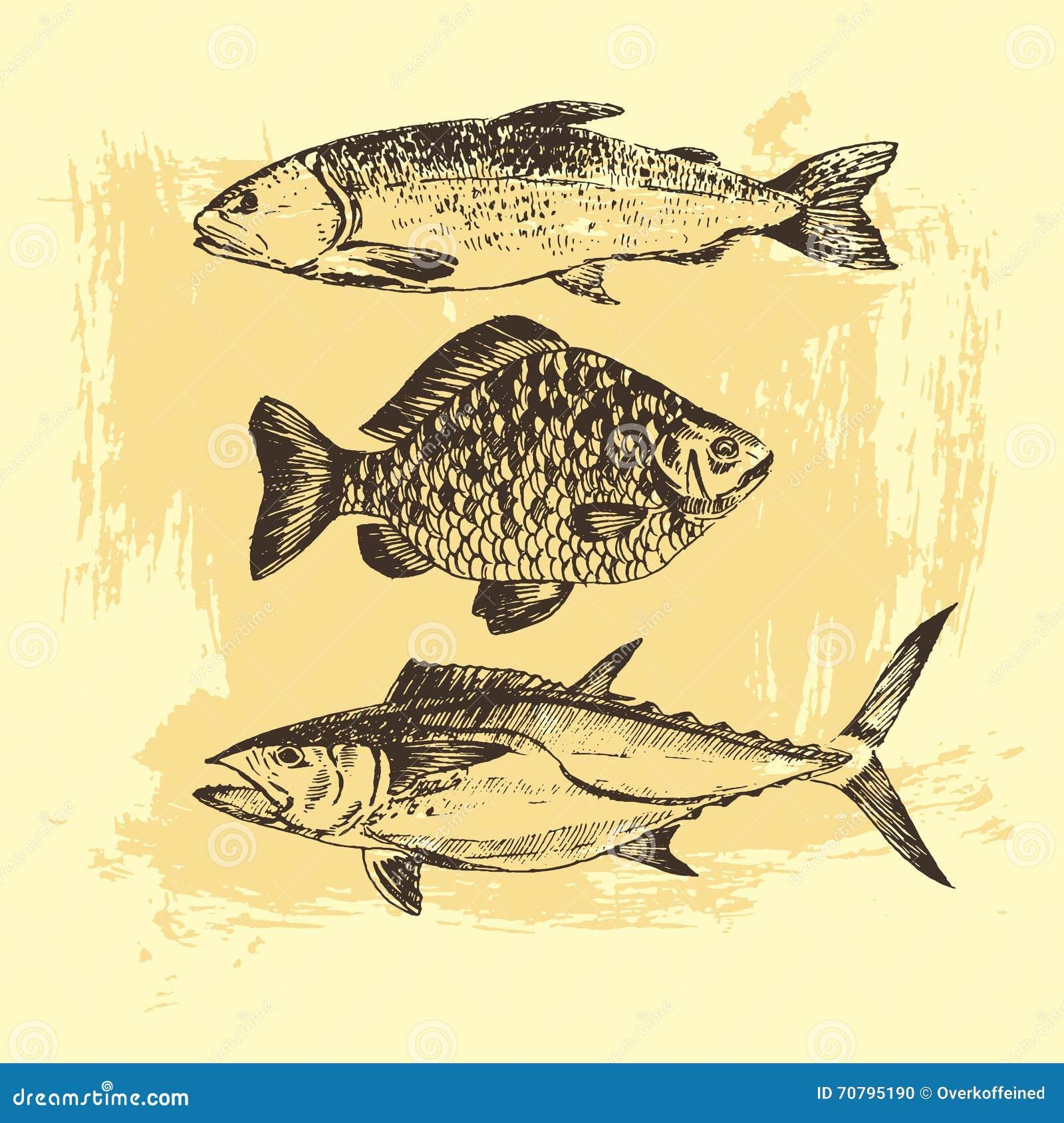Vector El Dibujo De Bosquejo De Los Pescados Salmón Trucha Carpa
