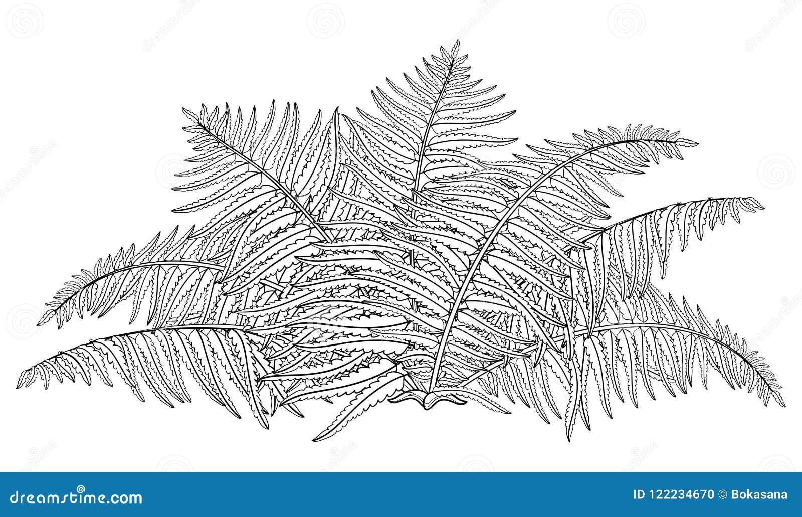 Vector El Dibujo Del Helecho Fósil De La Planta Del Bosque Del