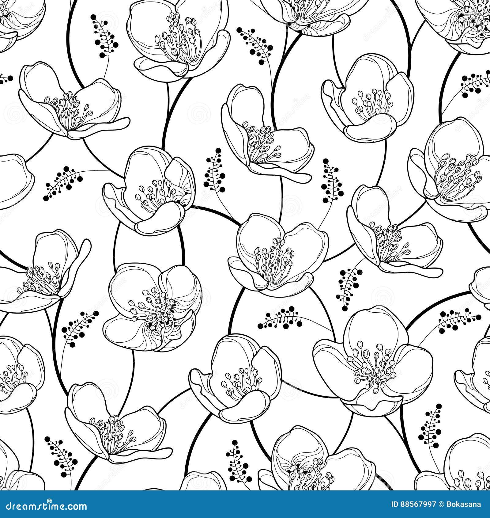 Vector el modelo inconsútil con las flores del jazmín del esquema en negro en el fondo blanco Fondo floral de la elegancia con ja