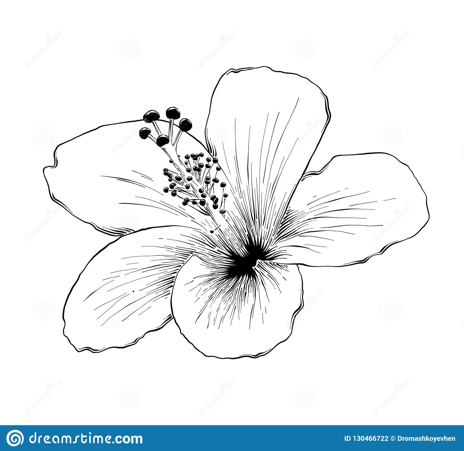 Hand Drawn Sketch Of Hawaiian Hibiscus Flower In Black Isolated On