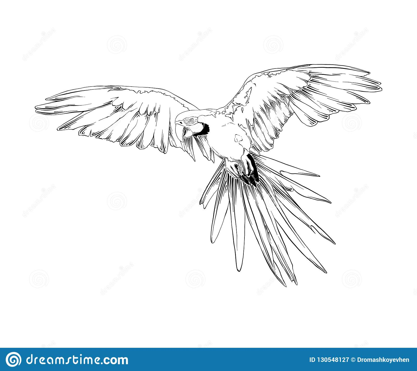 Hand drawn sketch of brazilian parrot bird in black isolated on white background. Detailed vintage etching style drawing.