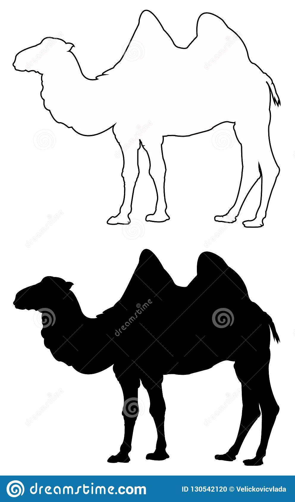 Camel silhouette - wildlife animal