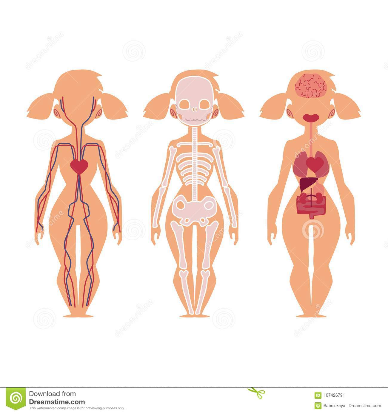 Vector People Internal Organs Anatomy, Structure Stock Vector ...