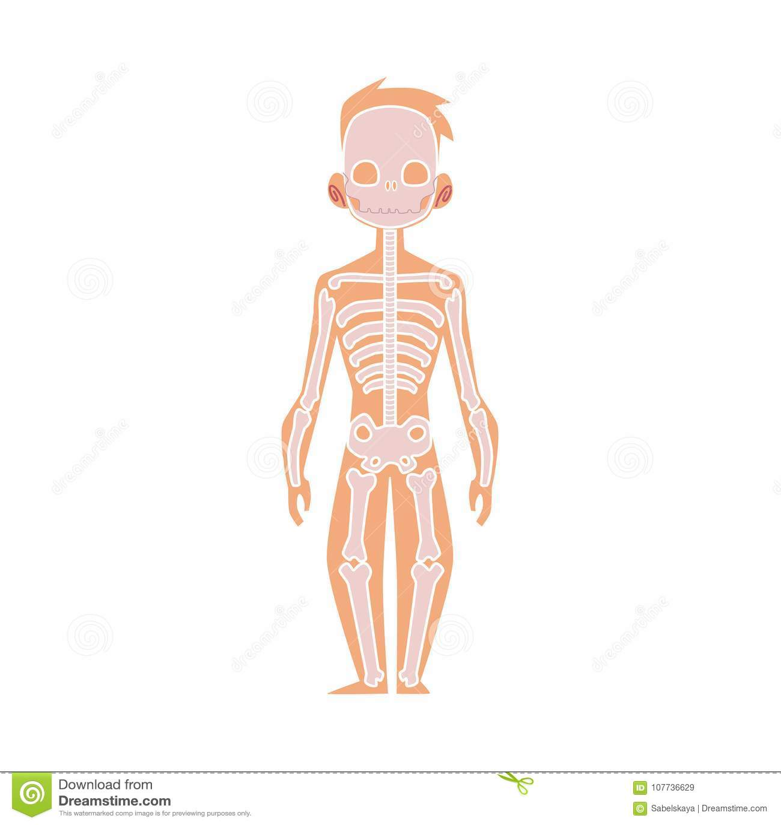 Vector Flat Structure Human Body Anatomy, Skeleton Stock Vector ...