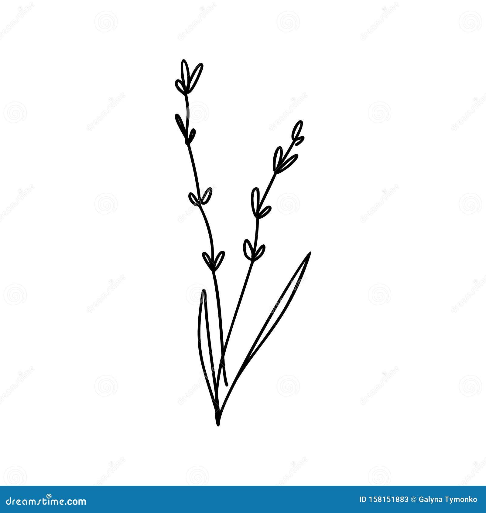 Floral Business Logotypes: Vector Floral Lavender Hand Drawn Logo Element In Elegant