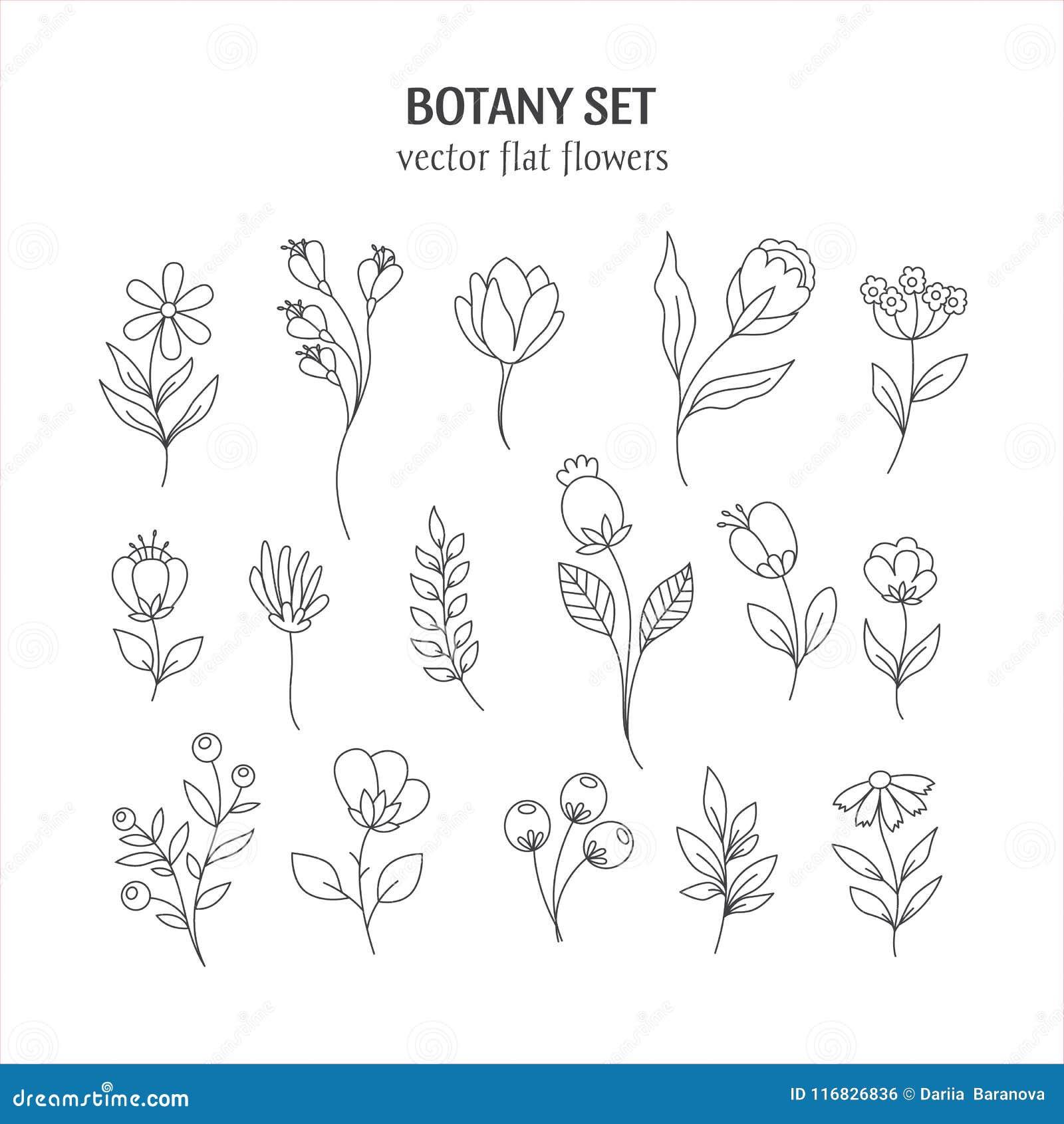 Flower Line Art Images: Line Botany Collection Stock Vector. Illustration Of