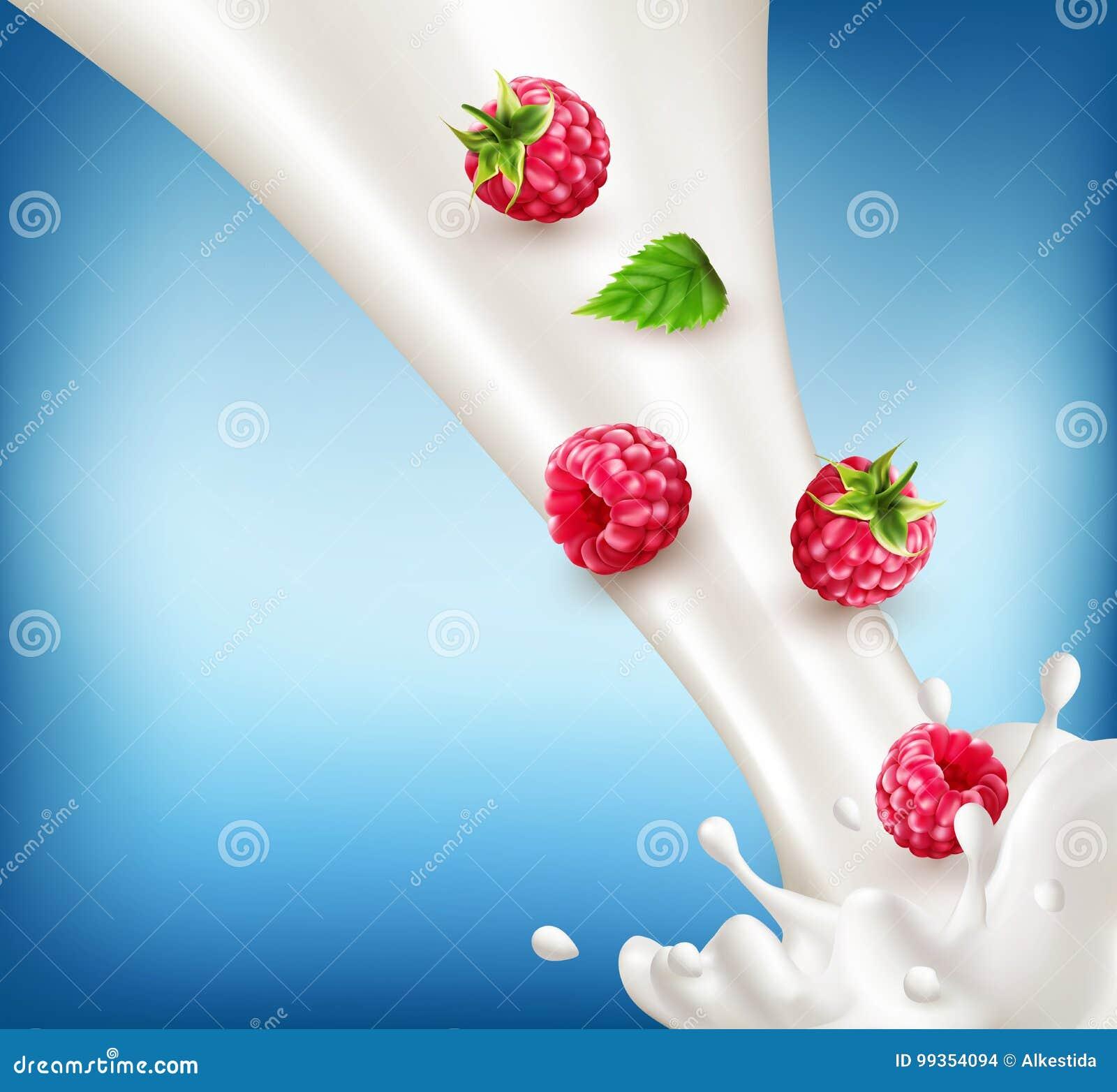 Vector a framboesa madura, vermelha que cai no leite Wi do respingo do leite