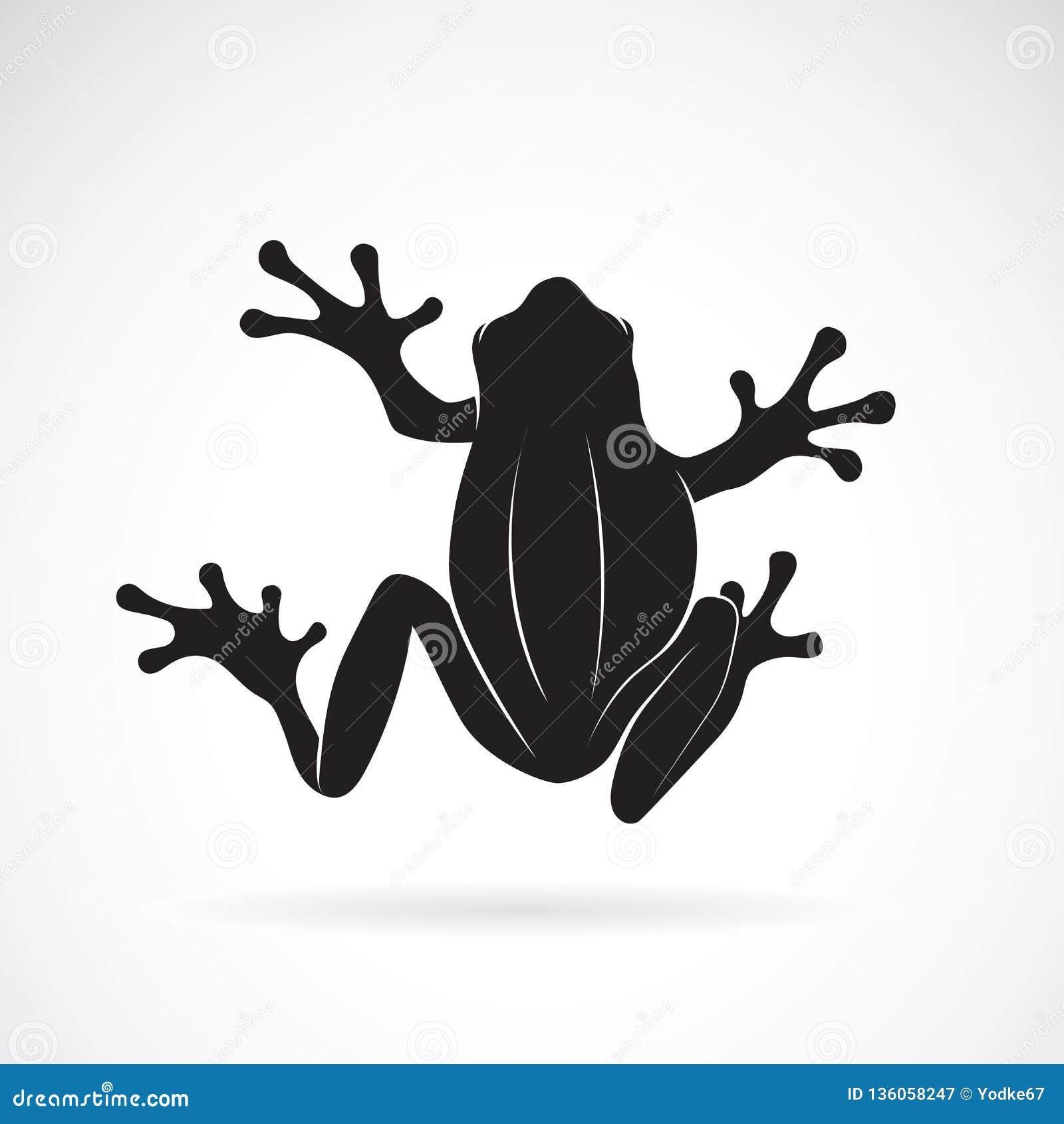 Vector of frog design on white background. Amphibian. Animal. Frog Icon.