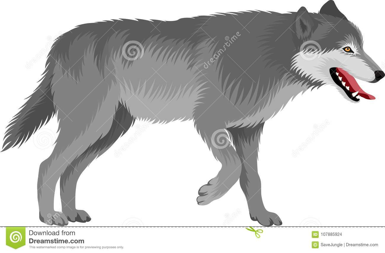 Todd Clipart 20 Fee Cliparts Download Imagenes: Gray Wolf Stock Illustrations