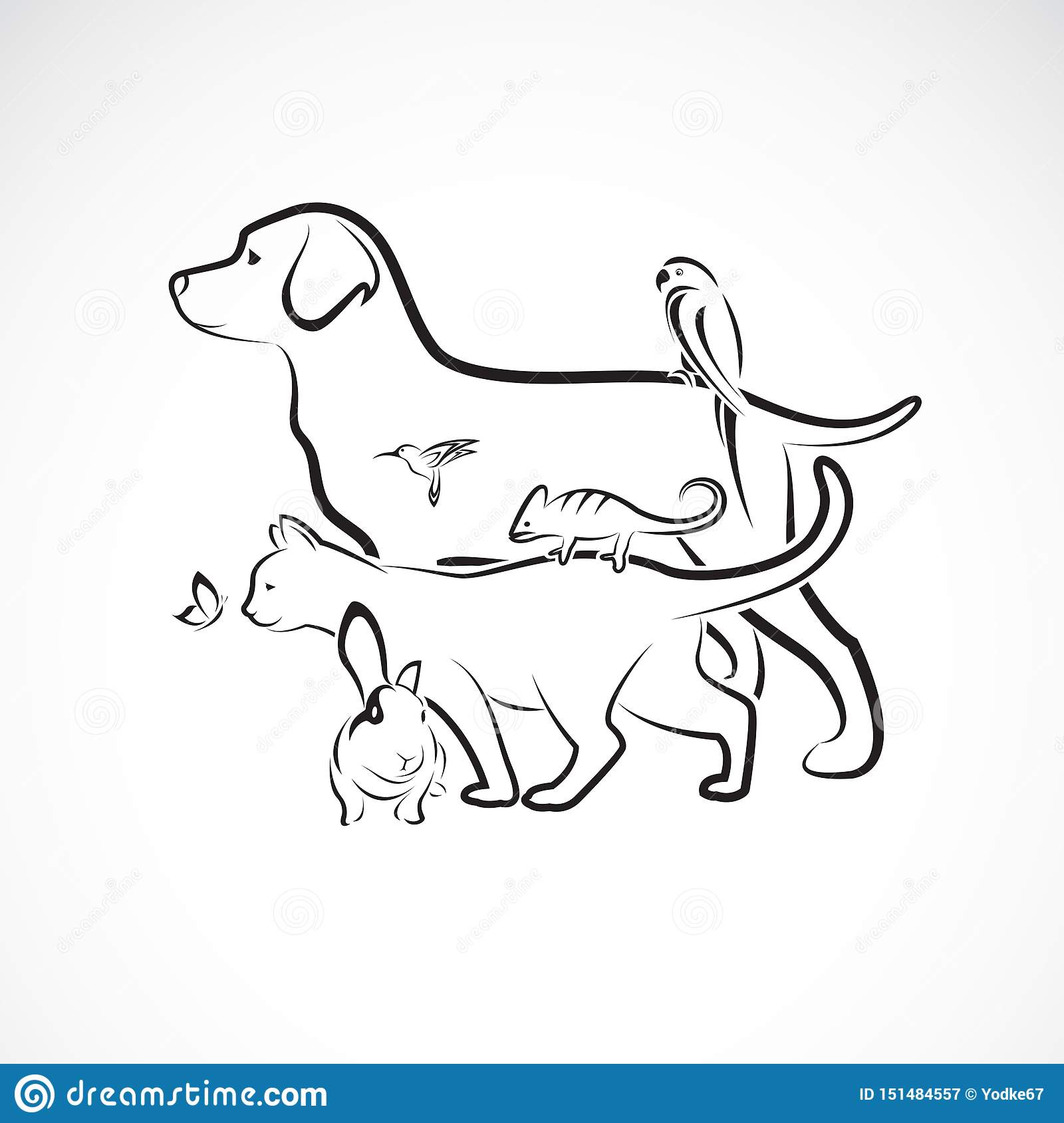 Vector Group Of Pets Dog Cat Parrot Rabbit Butterfly Hummingbird Isolated On White Background Pet Animals Easy Editable Stock Vector Illustration Of Group Easy 151484557