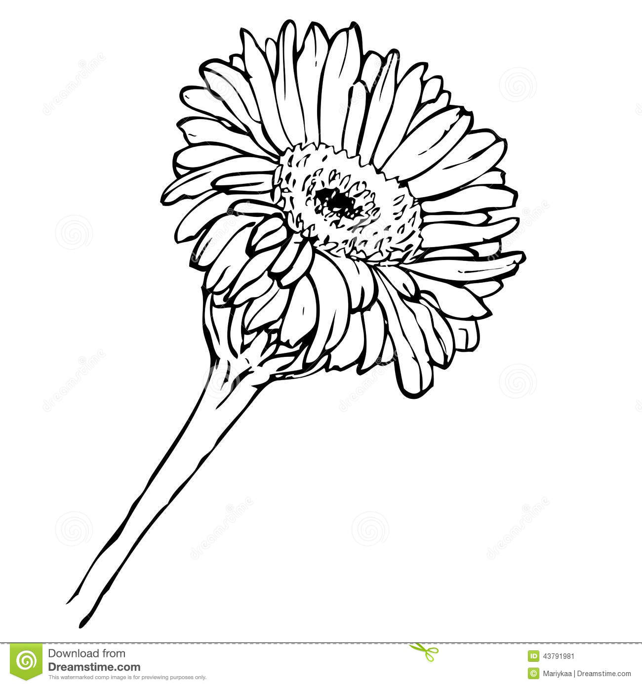 Vector Hand Drawing Black And White Gerbera Flower Stock Vector ...