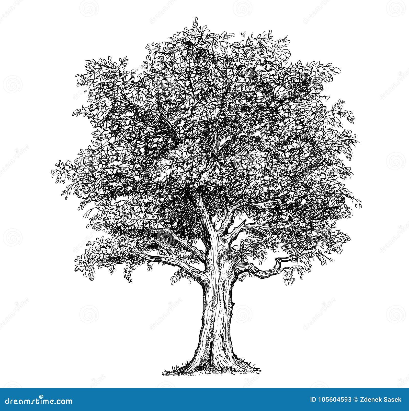 Pen Ink Tree Stock Illustrations 6 239 Pen Ink Tree Stock Illustrations Vectors Clipart Dreamstime