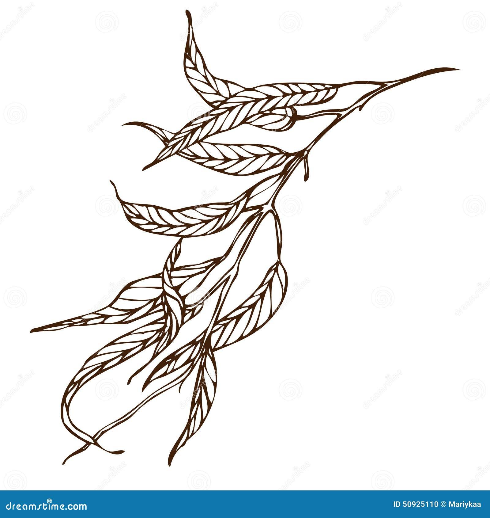 Vector Hand Drawing Eucalyptus Branch Stock Vector