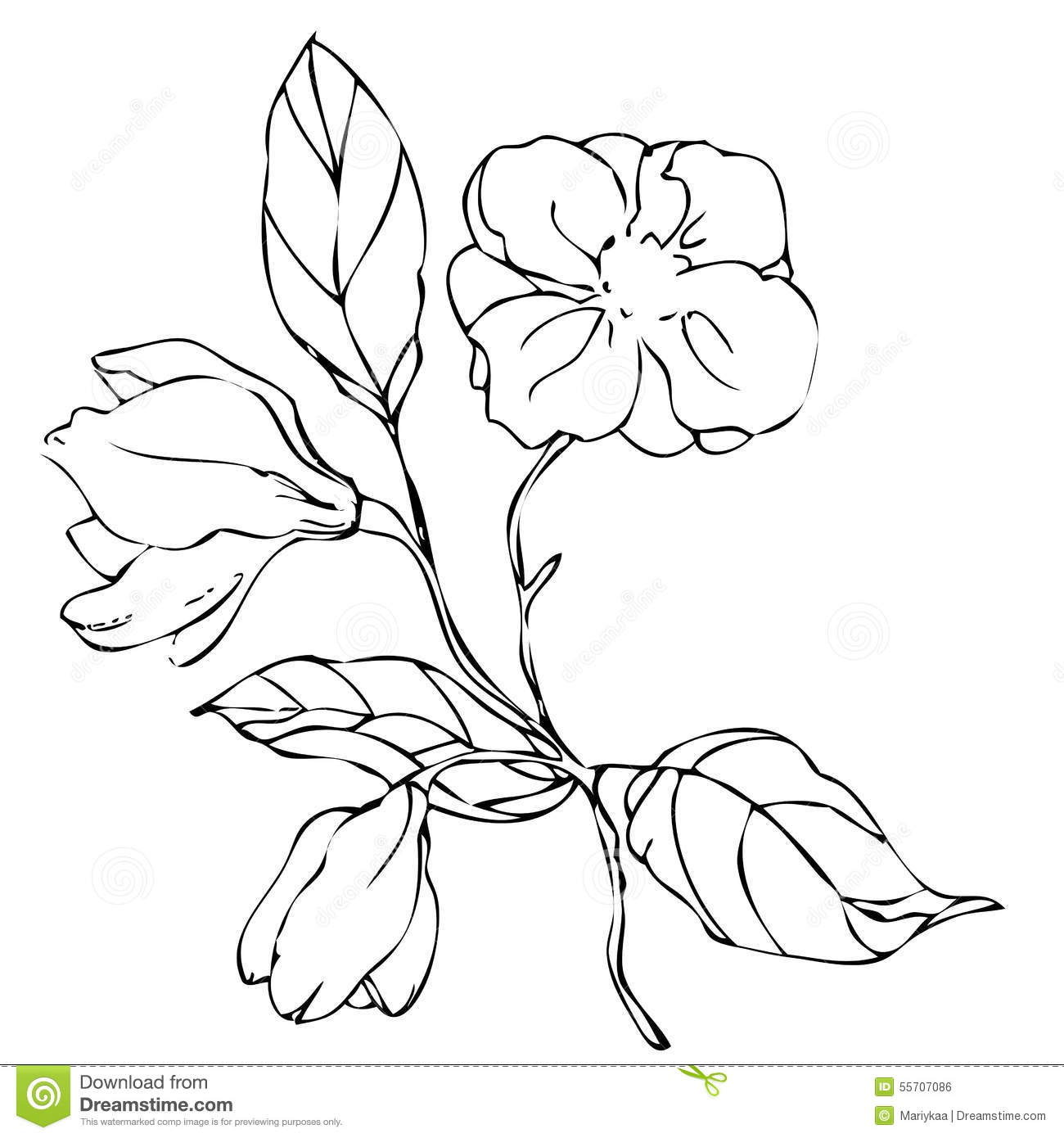 Magnolia Flower Line Drawing : Vector hand drawing magnolia flower stock