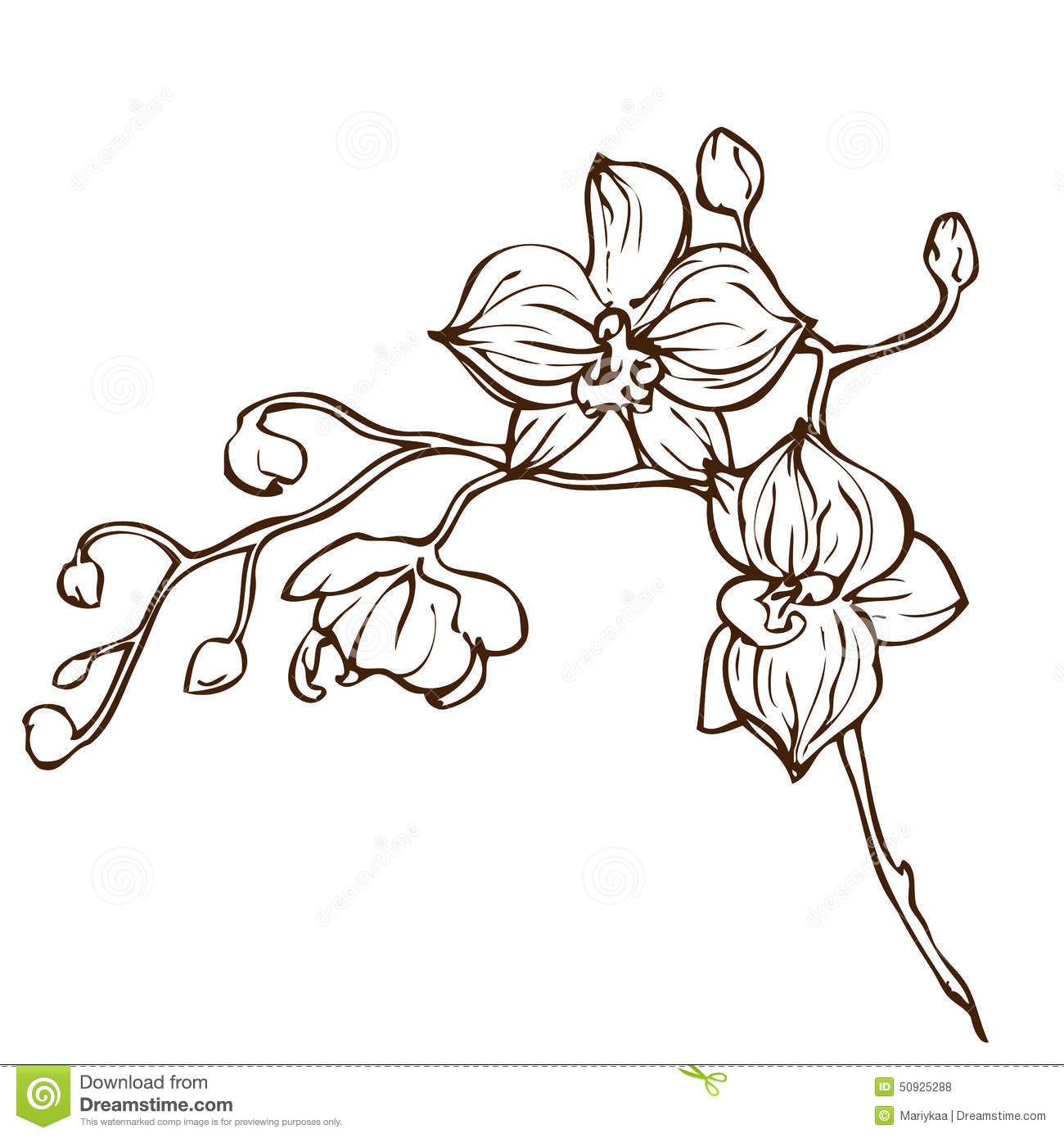 Vector Hand Drawing Orchid Flower Stock Vector