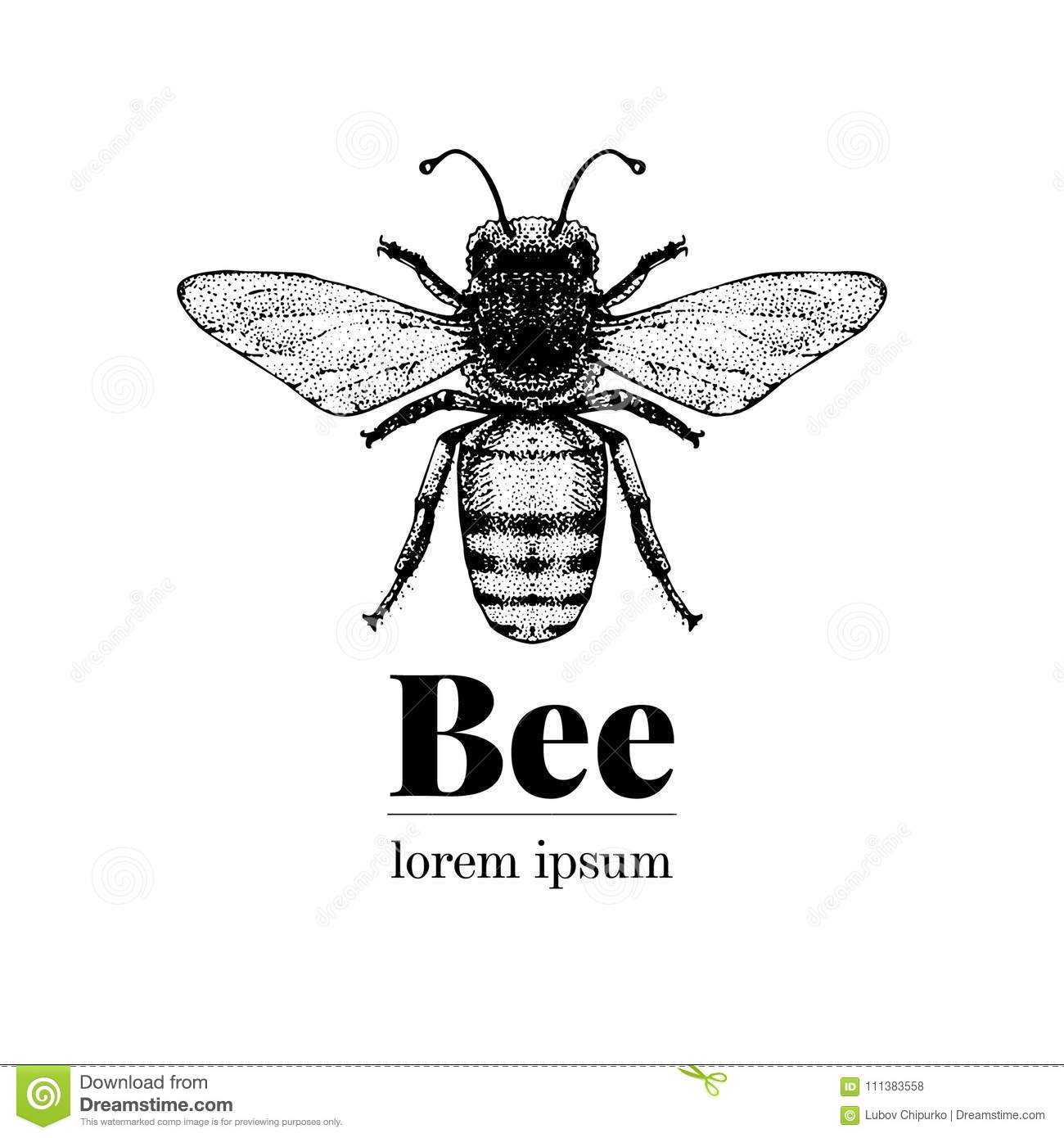 Vector Hand Drawn Bee Illustration Vintage Style Logo Template