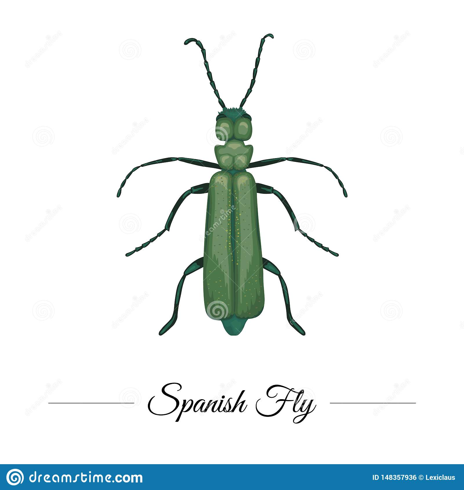 Vector hand drawn colored tropical green Spanish fly isolated on white background. Tropic themed logotype for natural design.
