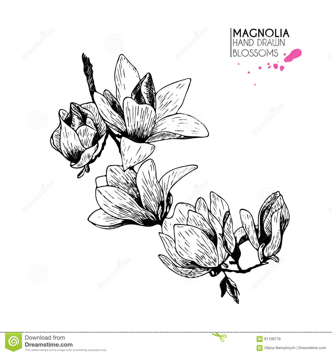 Hydrangea flower coloring pages - Vector Hand Drawn Hydrangea Isolated On White Background Engraved Vintage Botanical Illustration